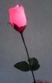 Colour Change Lite-up Rose
