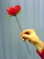 Lit Torch to Rose