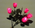 Bouquet Che Si Illumina, 5 Rose (SY)
