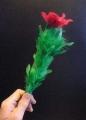 Fiore Che Nasce