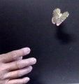 Farfalla Che Scappa