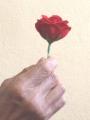 Fiammifero a Rosa Deluxe